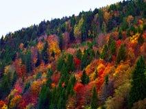 Färgrika Autumn Fall Forest Trees Landscape royaltyfri bild
