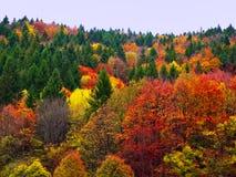 Färgrika Autumn Fall Forest Trees Landscape arkivfoton