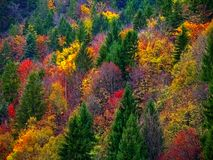 Färgrika Autumn Fall Forest Trees Landscape arkivfoto