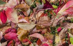 Färgrika Autumn Leaves In Garden royaltyfri bild