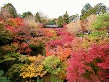 Färgrika Autumn Season i Japan Arkivbilder