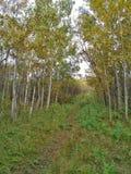 Färgrika Autumn Trail i en parkera Royaltyfria Bilder