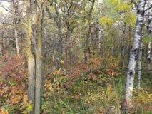 Färgrika Autumn Trail i en parkera Arkivfoton