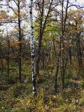 Färgrika Autumn Trail i en parkera Royaltyfri Foto