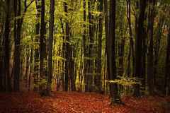 Färgrika Autumn Trees In Forest Royaltyfri Fotografi