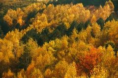 Färgrika Autumn Trees In Forest Arkivfoto