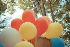 Färgrika ballonger i trädgård med pastellfärgad färg tonar Fotografering för Bildbyråer