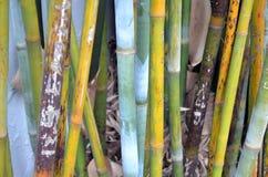 Färgrika bambustammar Royaltyfria Bilder