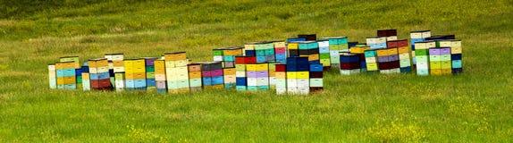 Färgrika bikupor av den rullande kullen av South Dakota, nära Cust royaltyfri foto