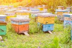 Färgrika bikupor i form av asken royaltyfri foto