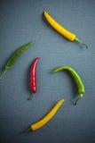 Färgrika blandade nya chilipeppar Fotografering för Bildbyråer