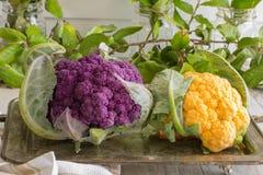 Färgrika Blomkål-lilor och guling Arkivbilder