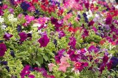 Färgrika blommabakgrunder Royaltyfria Foton