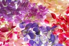 färgrika blommapetals royaltyfri foto