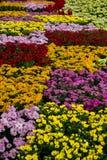Färgrika blommaskärmar på det Dasada gallerit, Prachinburi, Thailand arkivfoton