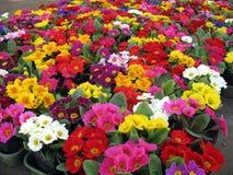 färgrika blommor Royaltyfria Foton