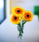 Färgrika blommor Arkivbild