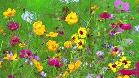 färgrika blommor stock video