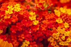 färgrika blommor Royaltyfria Bilder
