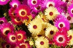 färgrika blommor Fotografering för Bildbyråer