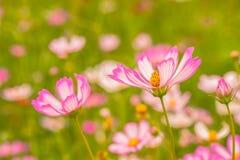 8 färgrika blommor royaltyfri foto