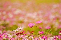 Färgrika blommor 13 Royaltyfria Bilder