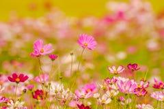 Färgrika blommor 17 Arkivbild