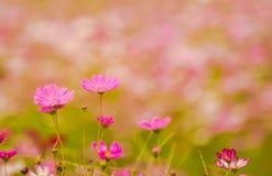 Färgrika blommor 11 Arkivfoton