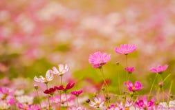 Färgrika blommor 12 Arkivbild