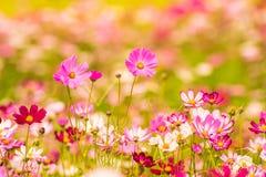Färgrika blommor 16 Royaltyfri Fotografi