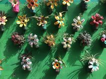 färgrika blommor Arkivfoton