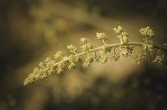 Färgrika blommor av den kastanjebruna closeupen Royaltyfri Foto