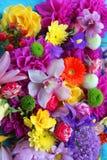 färgrika blommor för bakgrund Arkivbild