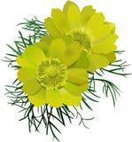 färgrika blommor för blom Arkivfoton