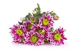 färgrika blommor för bukett Royaltyfri Fotografi