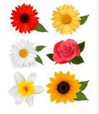 färgrika blommor för härlig stor samling royaltyfri illustrationer
