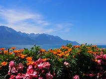Färgrika blommor för skönhet på promenad i den MONTREUX staden på sjöGenève i SCHWEIZ Fotografering för Bildbyråer