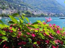 Färgrika blommor för skönhet på promenad i den MONTREUX staden på sjöGenève i SCHWEIZ Arkivbilder