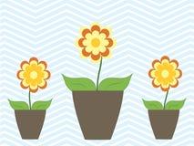 Färgrika blommor för sommarvår i krukaslags tvåsittssoffahem Royaltyfria Bilder