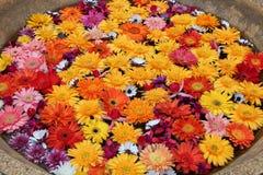 Färgrika blommor förläggas i en bunke (Thailand) fotografering för bildbyråer