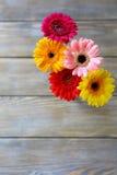 Färgrika blommor - gerbera fotografering för bildbyråer