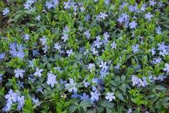 färgrika blommor gränsar trädgårds- design för skönhetsommarinspiration Royaltyfria Bilder