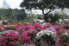 Färgrika blommor i Bangkok Royaltyfri Bild