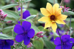 Färgrika blommor i blombakgrund Arkivfoton
