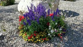 Färgrika blommor i brisen lager videofilmer