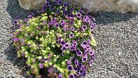 Färgrika blommor i brisen stock video