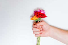 Färgrika blommor i den manliga handen Arkivbilder