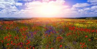 Färgrika blommor i fältet i solig dag Den underbara sommaren landskap Royaltyfria Bilder