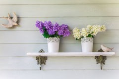 Färgrika blommor i krukatappning på väggen Royaltyfri Foto