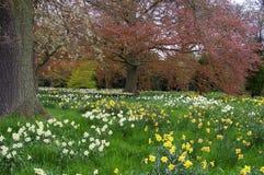 Färgrika blommor i natur Arkivfoto